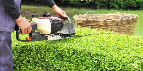 gardener trimming hedge with trimmer machine in a garden