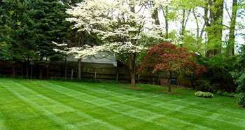 backyard lawn after landscaping