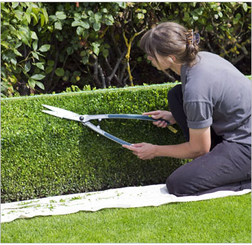 woman using hedge clippers to trim hedges
