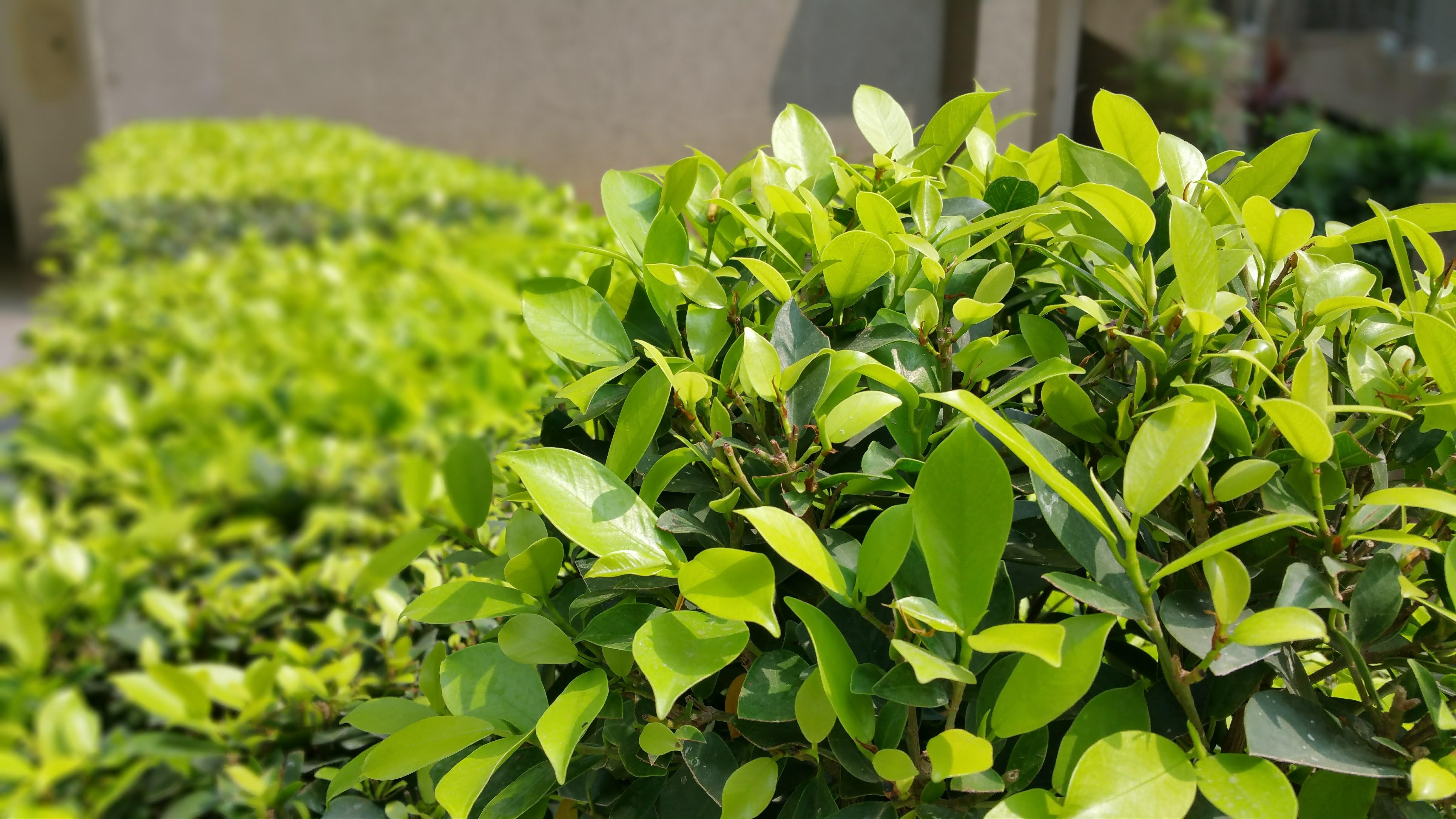 shrub removal fuquay varina